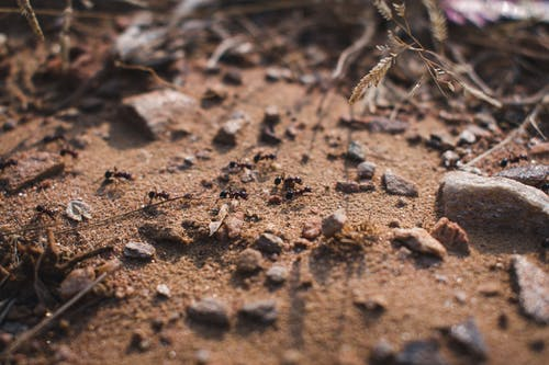 Free stock photo of animals, ants, desert, wildlife