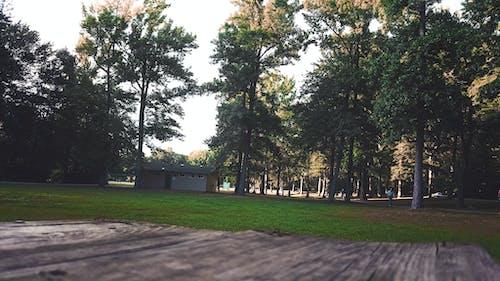 Imagine de stoc gratuită din arbore, arbori, bancă, casă in copac