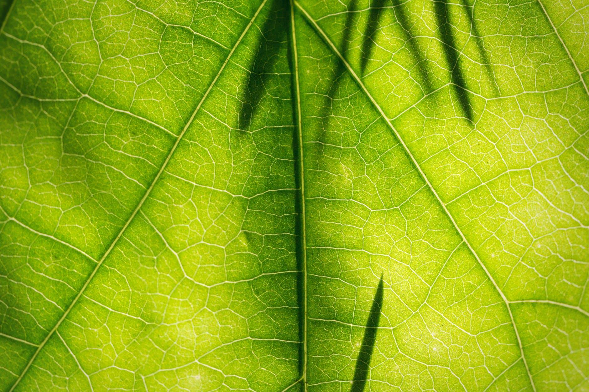 Екологія як бізнес: зелений тариф