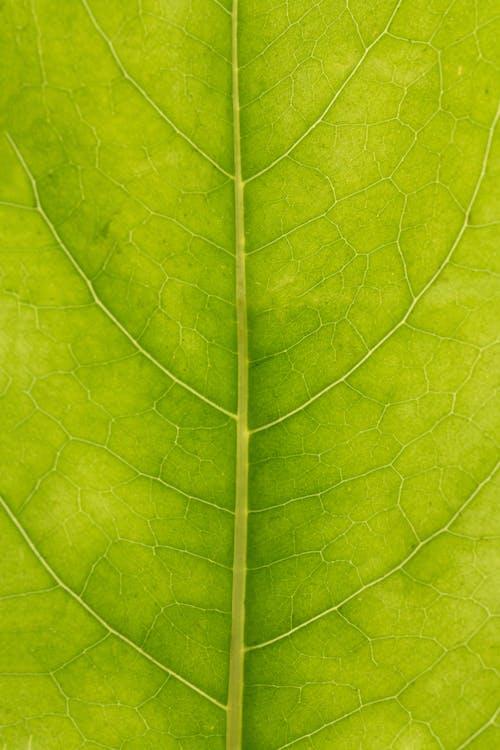 Fotobanka sbezplatnými fotkami na tému abstraktný, asymetria, botanika, chlorofyl