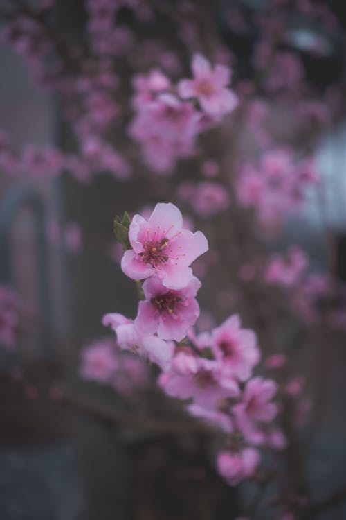 Free stock photo of bloom, branch, cold, depth of field