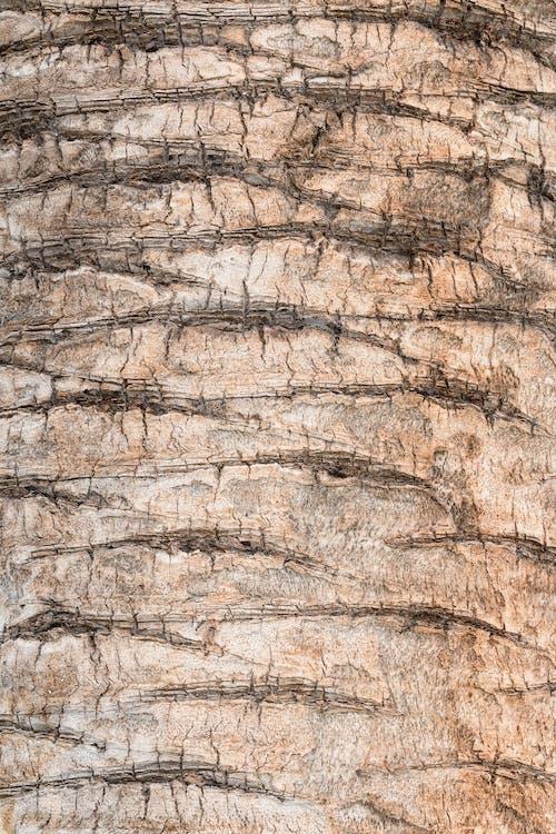 Fotobanka sbezplatnými fotkami na tému abstraktný, detail, dizajn, drevo