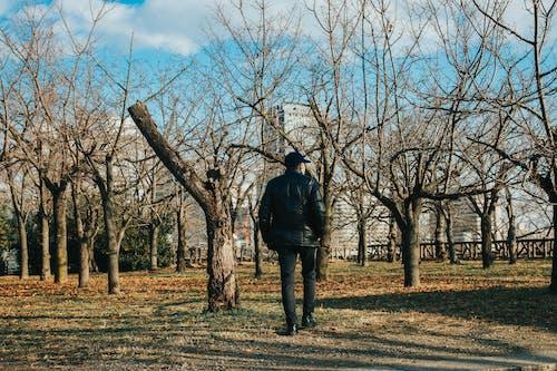 Fotos de stock gratuitas de invierno, Japón, jardín, paisaje de invierno