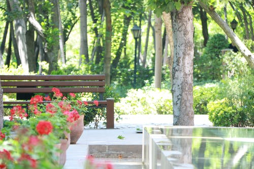 Photos gratuites de banc, banc de parc, banc en bois, belle fleur