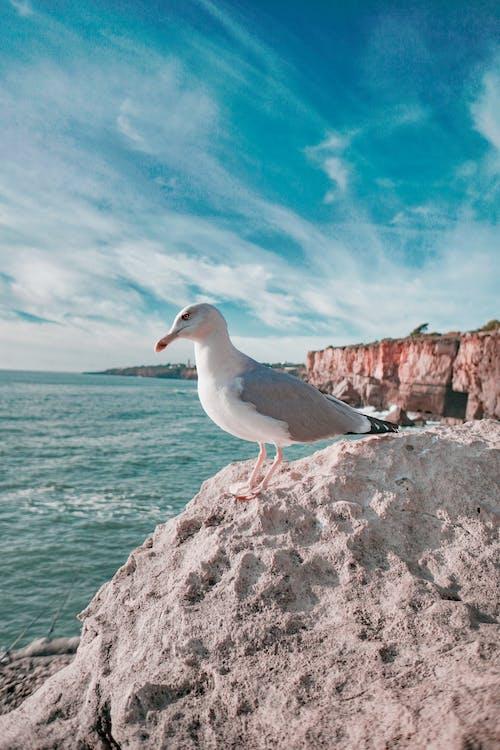 Ảnh lưu trữ miễn phí về chim, chim biển, chụp ảnh động vật, con vật