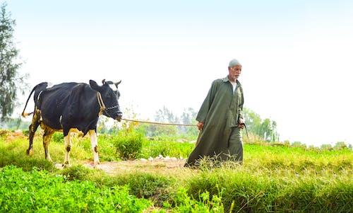 Foto profissional grátis de agricultor, céu, céu bonito