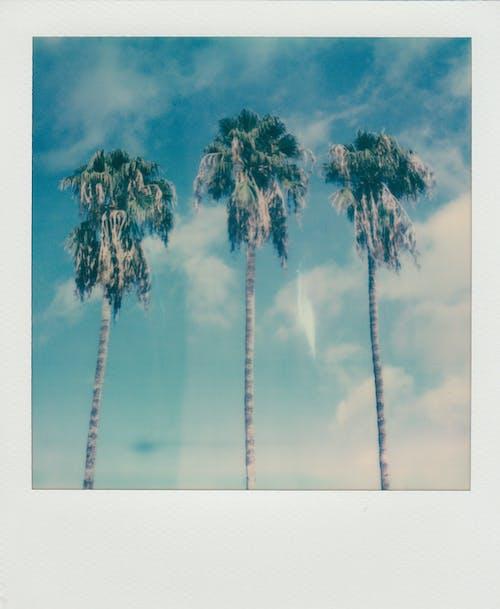 사진, 야자나무, 열대의, 즉석 사진의 무료 스톡 사진