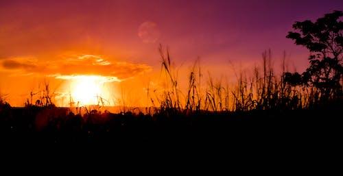 Ingyenes stockfotó este, esti ég, esti nap, felhő témában