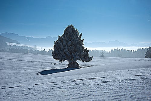 Free stock photo of blue sky, fir tree, fog, frozen