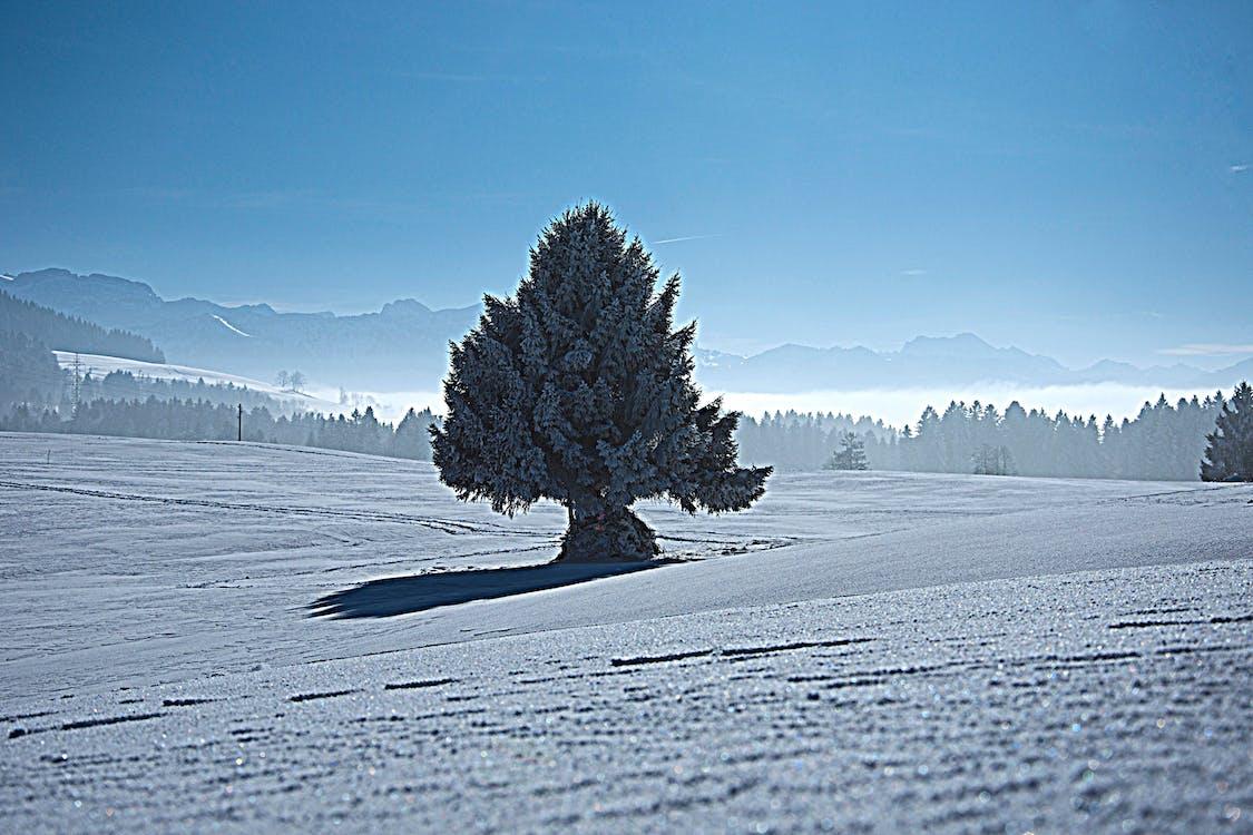 dondurulmuş, donmuş, kar içeren Ücretsiz stok fotoğraf