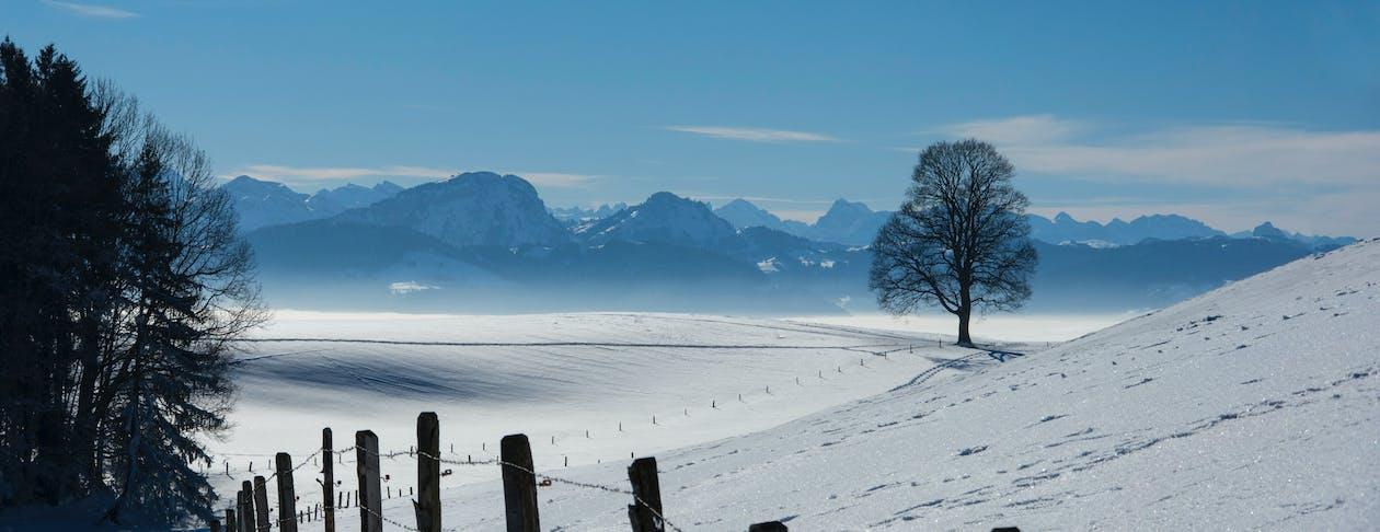 ağaç, dağlar, kar içeren Ücretsiz stok fotoğraf