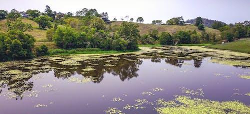 Darmowe zdjęcie z galerii z dron, drzewa, fioletowy