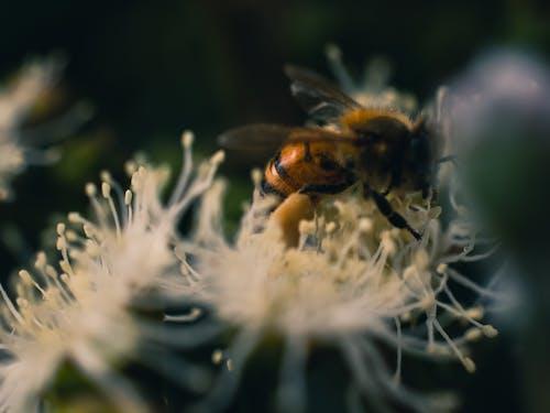 ハチ, マクロ, 自然, 花の無料の写真素材