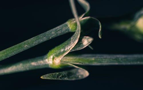 バックグラウンド, マクロ, 幹, 緑の無料の写真素材