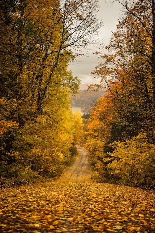 Shallow Focus Photo of Autumn Trees