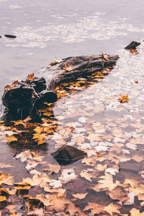 Brown and Yellow Leaves on Body of Water