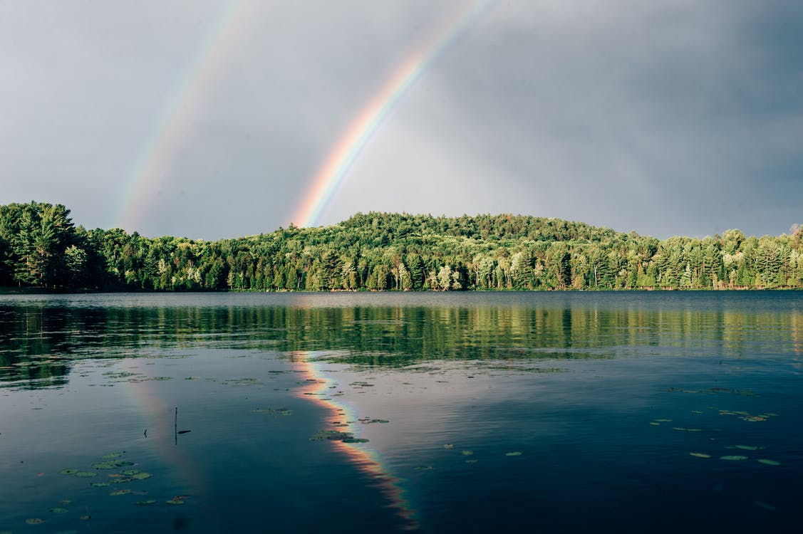 Photo Of Rainbow Above Trees