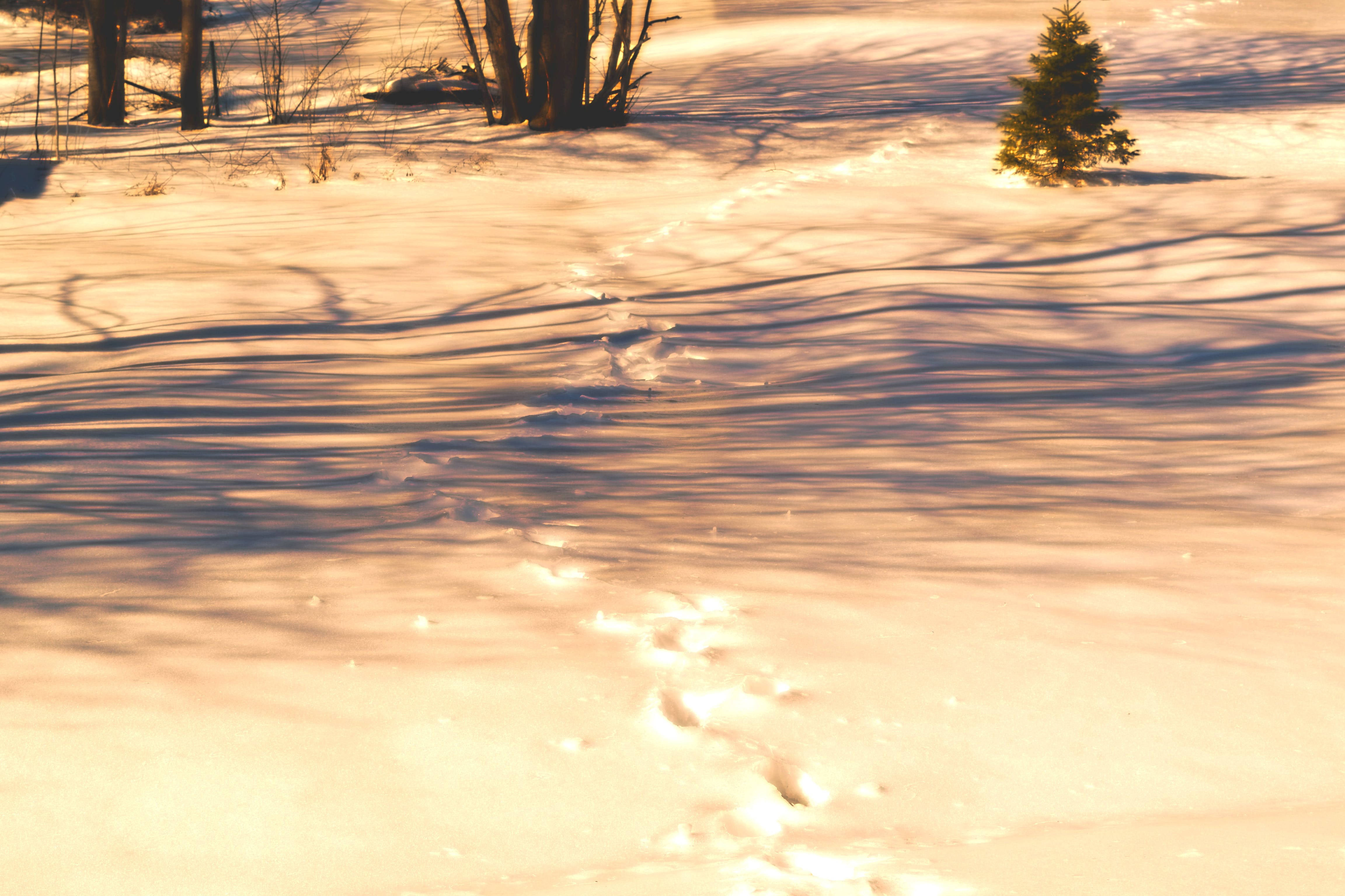 Free stock photo of footprints, footsteps, outside, trees