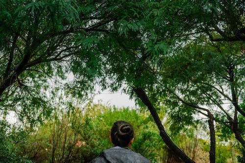 Ảnh lưu trữ miễn phí về câu thơ palo, cây palo verde, cô gái đi dưới palo verde, người phụ nữ đi dưới cây paloverde
