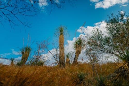 Ảnh lưu trữ miễn phí về arizona, baja california, bảo tồn sinh học, buổi sáng sa mạc