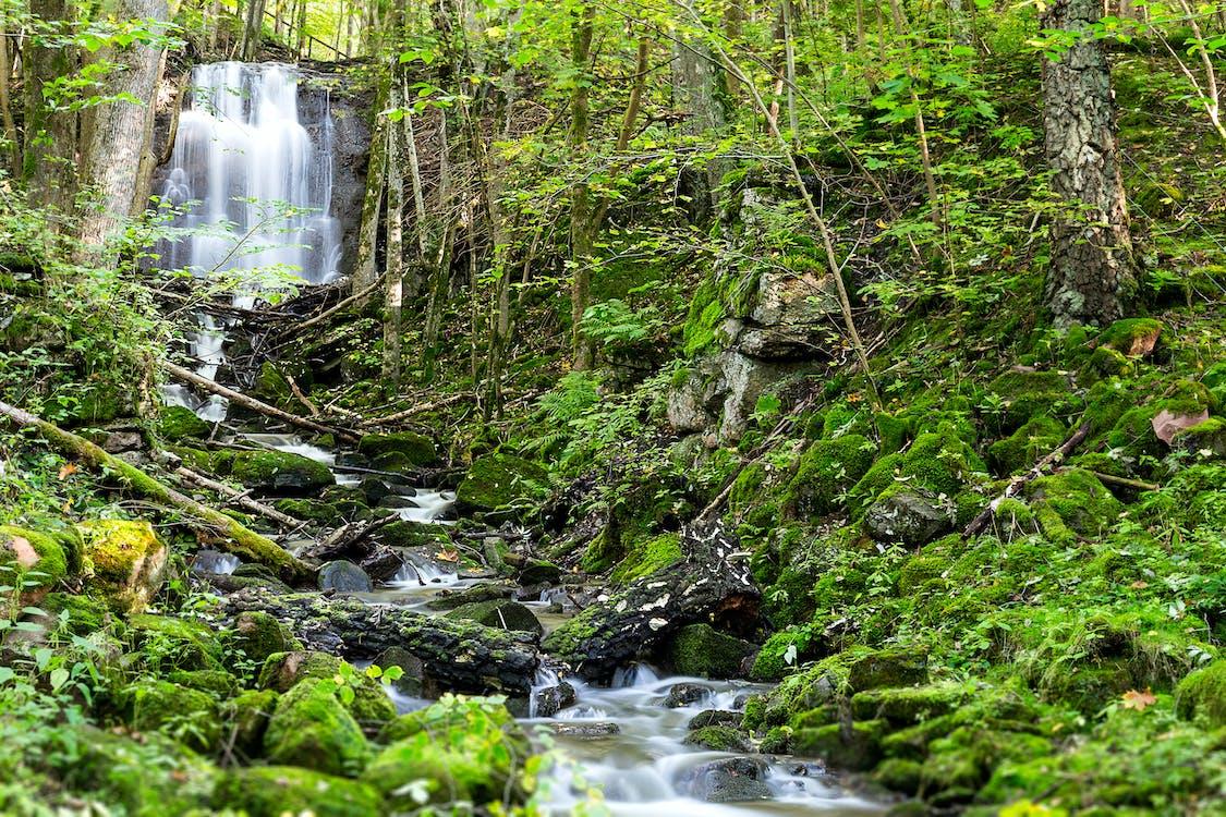 aigua, arbres, bosc