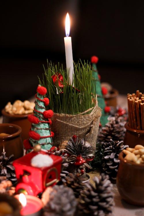 Безкоштовне стокове фото на тему «адвент, відпустка, декорація, дерево»
