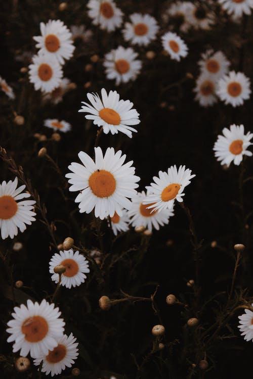 Fotobanka sbezplatnými fotkami na tému aróma, botanický, botanika