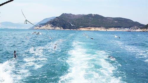 Free stock photo of busan, korea, sea, seagull
