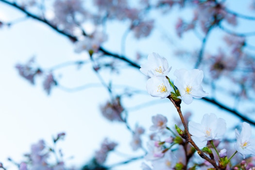 Free stock photo of nature, flowers, garden, branches