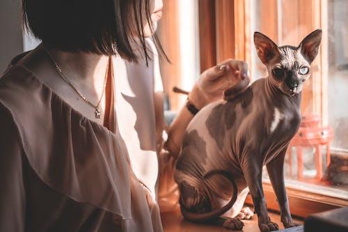 Základová fotografie zdarma na téma elegantní, hezký, holka, kočka