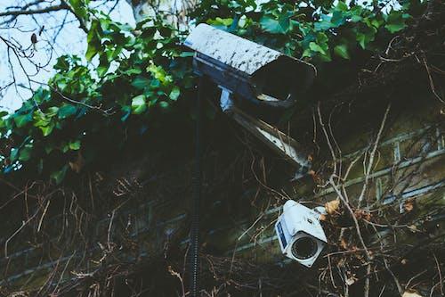 CCTV, カメラ, セキュリティ, ぶどうの木の無料の写真素材