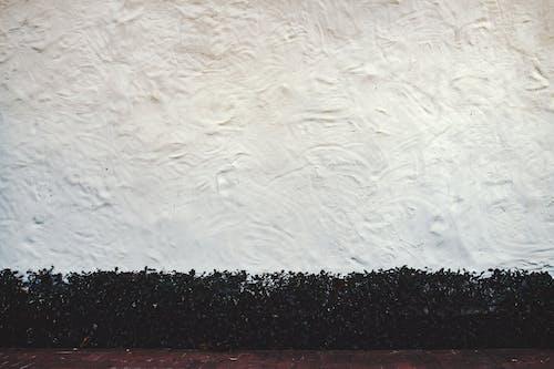 Ilmainen kuvapankkikuva tunnisteilla kasvit, muuri, pinta, seinä