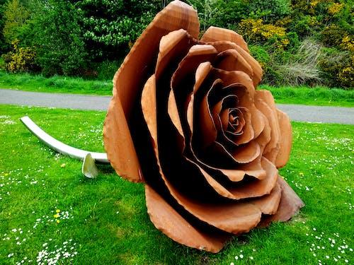 Brown Rose on Grass Field
