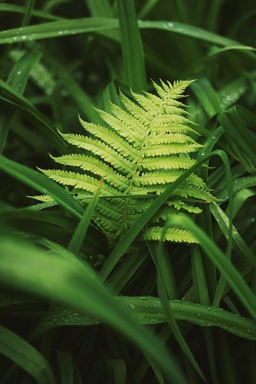 Close-Up Photo Of Fern Leaf