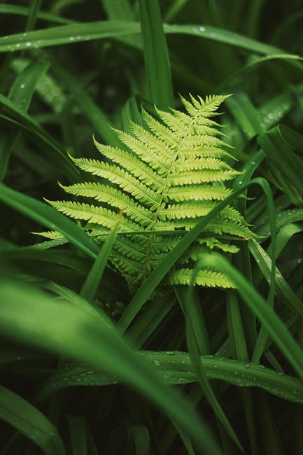 Close up photo of fern leaf