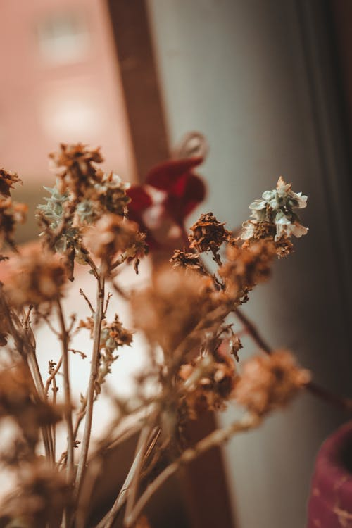 Bunch of dried branches with flowers placed inside of cozy room with daylight