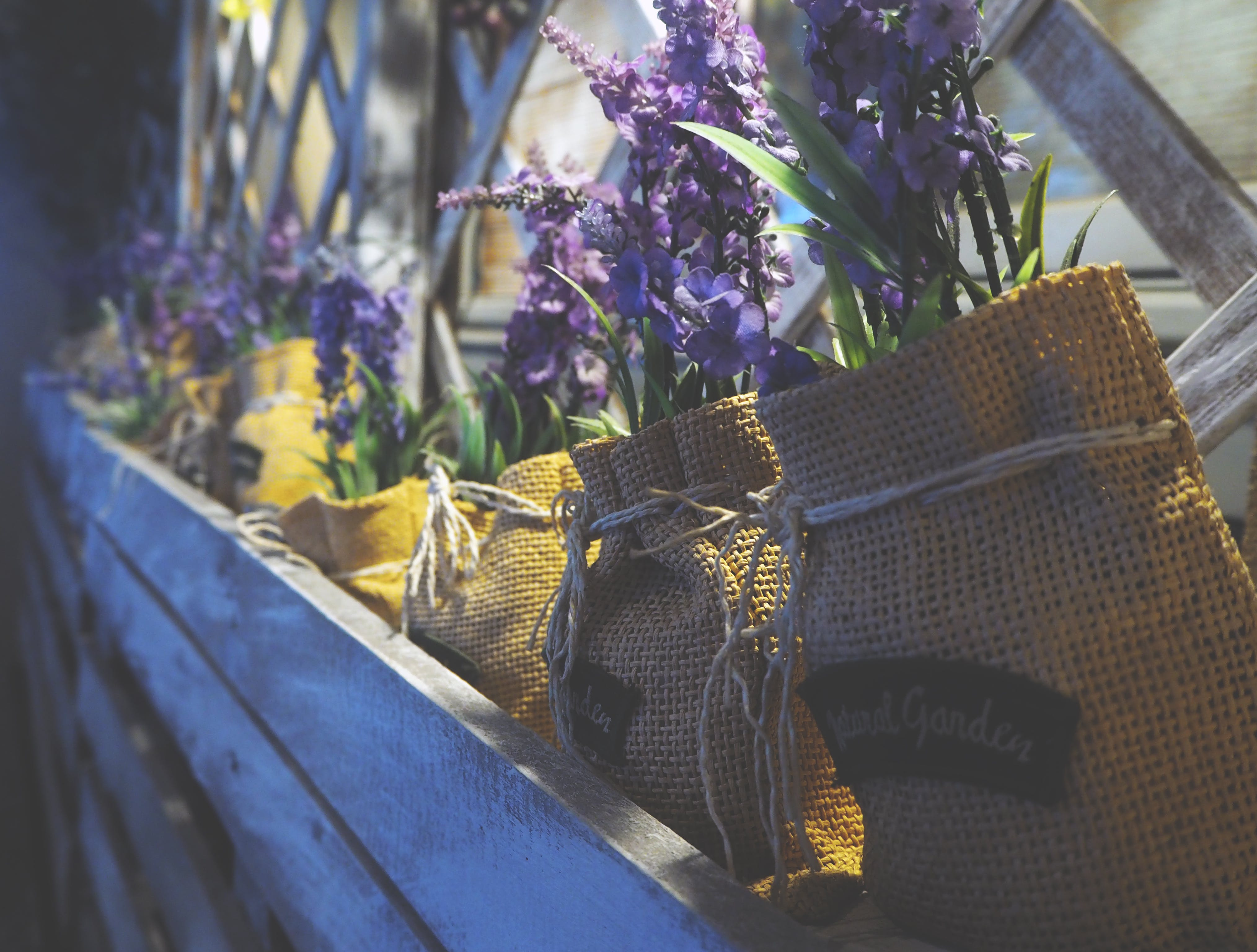 Purple Flowers in Yellow Pouches on Window Ledge