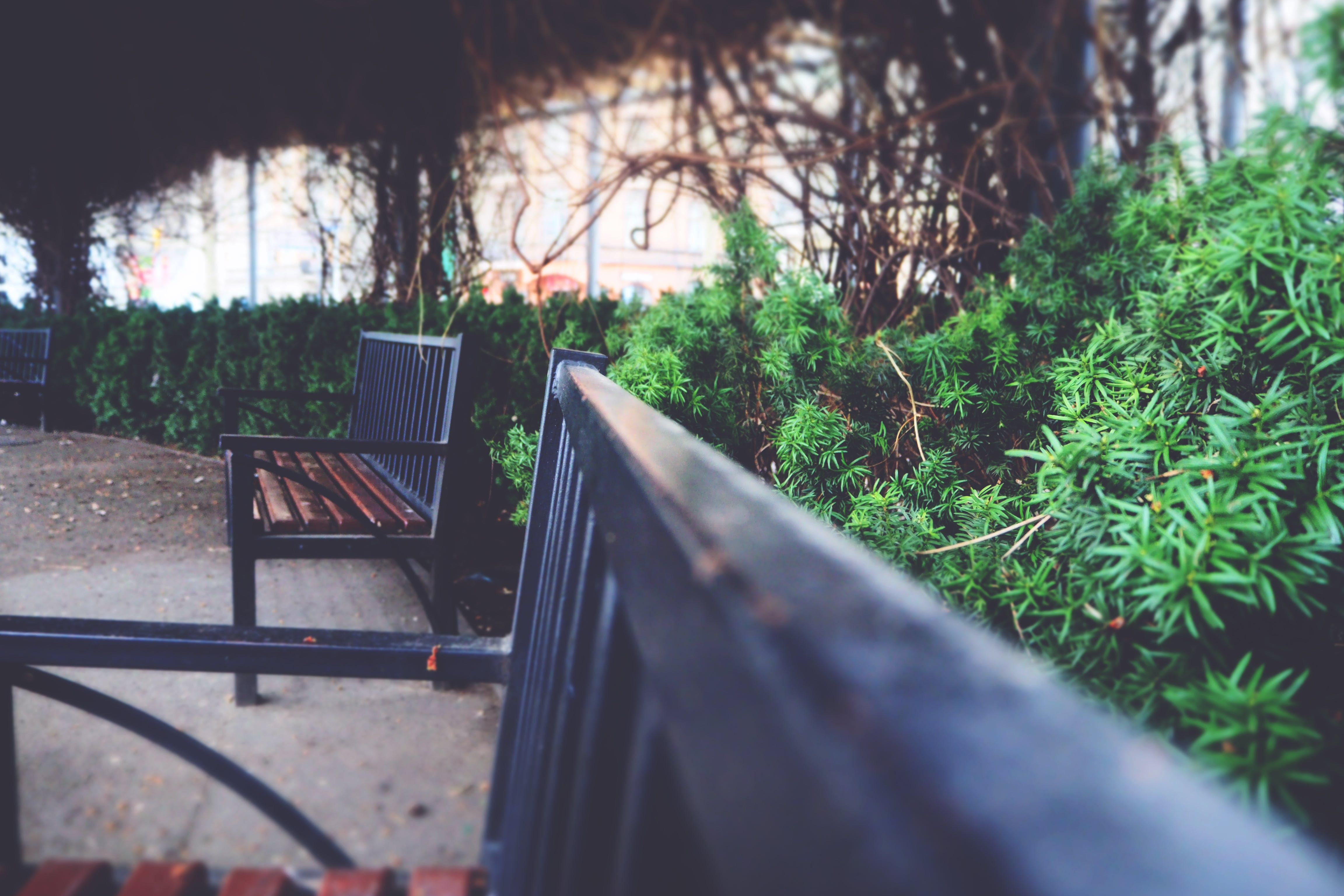 Two Black Metal Arm Benches Near Green Plants