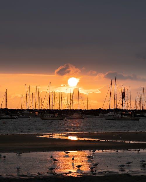 Δωρεάν στοκ φωτογραφιών με 200mm, βάρκες, γλάροι, δύση του ηλίου