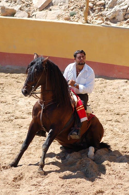 Immagine gratuita di cavallerizzo, cavallo, ciclista, spagna