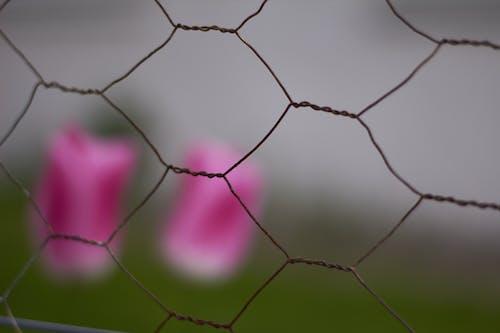 Foto d'estoc gratuïta de ennuvolat, fil de pollastre, flor, gris