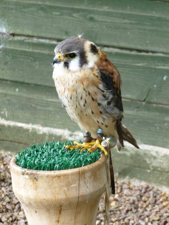 Free stock photo of animals, bird of prey, living