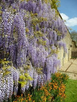 Free stock photo of flowers, garden, grass, petals