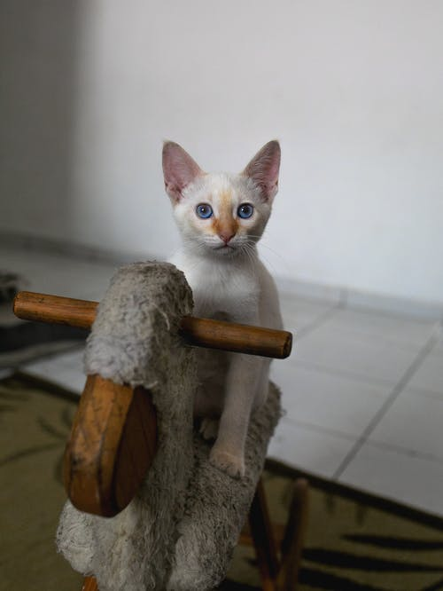 Cat on Wooden Horse
