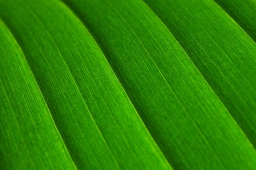 Close Up Photo of Green Textile