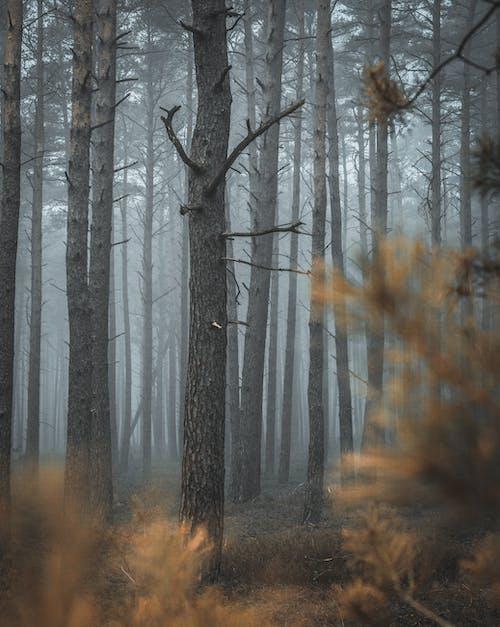 Ilmainen kuvapankkikuva tunnisteilla metsä, puut, sumu, sumuinen