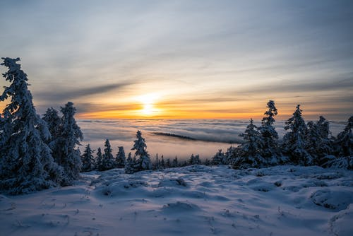 Trees on Snowfield during Golden Hour