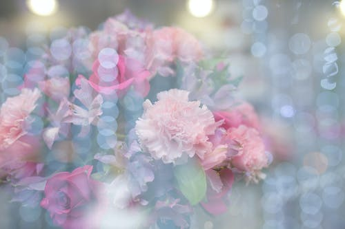 Imagine de stoc gratuită din aranjament floral, buchet, delicat, estompare