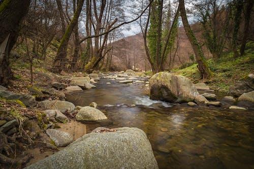 Immagine gratuita di acqua, alberi, ambiente, bellissimo