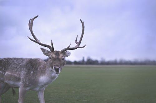Free stock photo of animal park, deer, dublin, walk